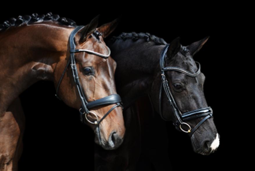 K&L Dressage Horses.