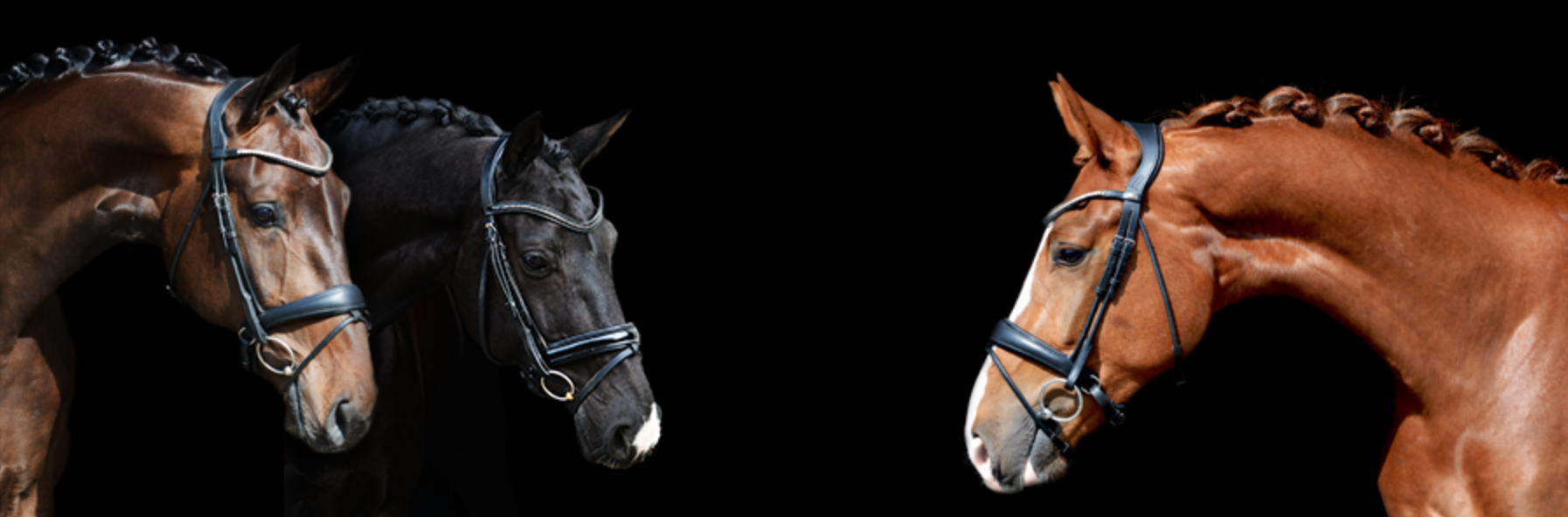 K&L Dressage Horses